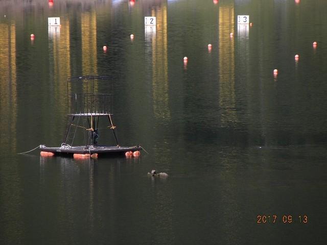 170913-2水中島頭