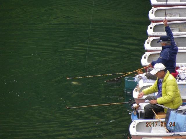 170524-2固定ボート水中魚