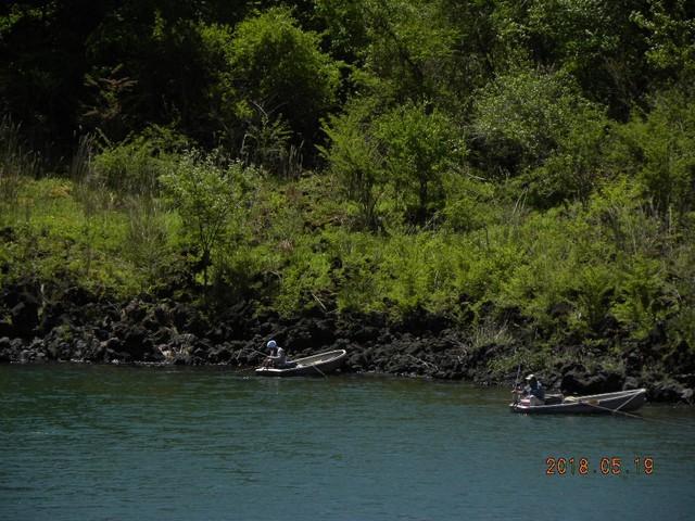 180519-2松の木前釣れた⓶