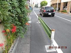 路傍の花ー2010秋ー1