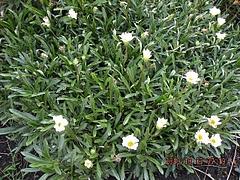 路傍の花ー2010秋ー3