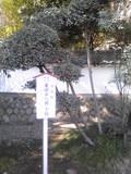 Image494