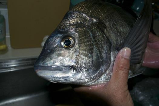 【画像】ジッジ(ハゲ)が魚釣りに出かけた結果wwwwwwwwww