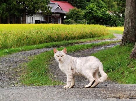 マジレス頼む。ガチニートだけど猫見つけたから見て!(※画像あり)
