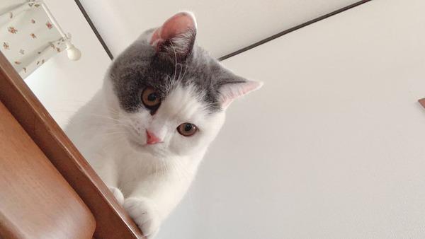 今日うちの猫の誕生日なんだけど(※画像あり)