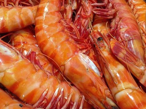 海老をむくワイ「なんやこれ虫やんけ…」海老を食うワイ「なんやこれ美味やんけ…」 →