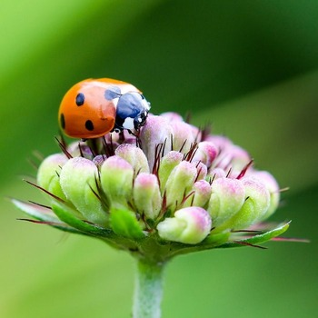 虫の人生とかいうガチのハードモードwww