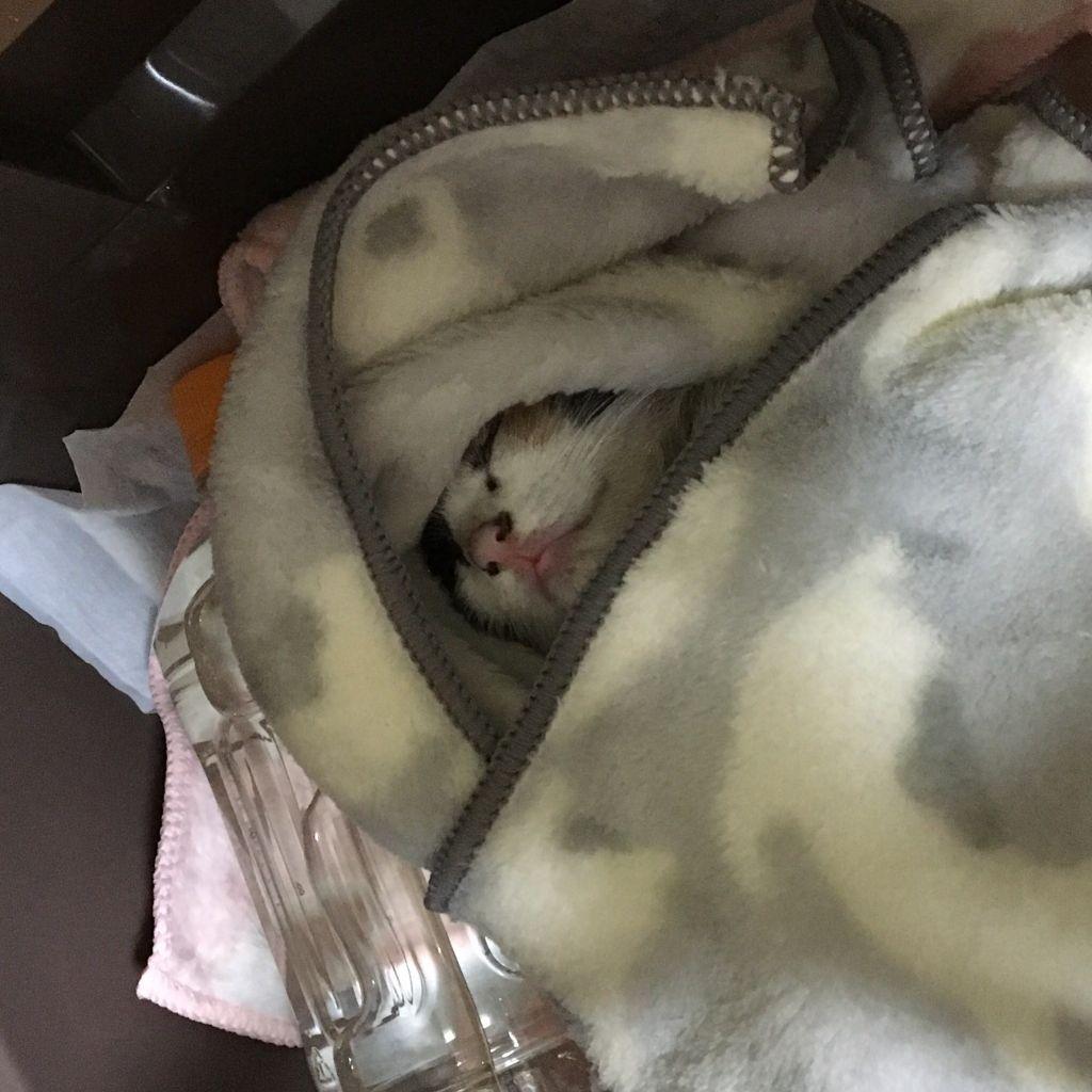 子猫を拾ってから1ヶ月経った(※画像あり)