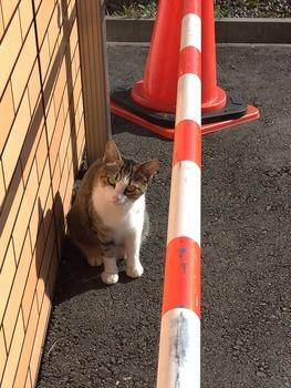 コンビニで猫みつけた!!!(※画像あり)