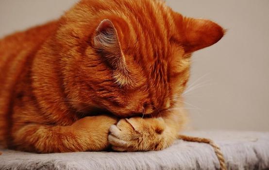 【悲報】ワイ社会人、平日の平均睡眠時間3時間半www