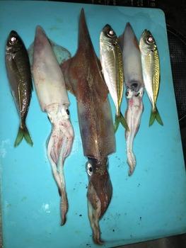 釣りって食費節約できる?(※画像あり)