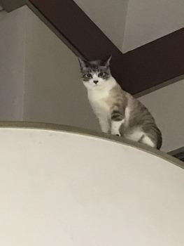 うちの猫がライバル的なポジションで現れて俺の事めっちゃ見下してくるんだけど(※画像あり)