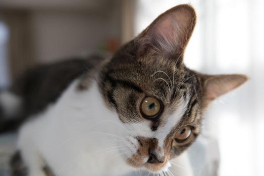 子猫拾って166日目。避妊手術の抜糸も終わり快気祝いのスレを建てる(※画像あり)