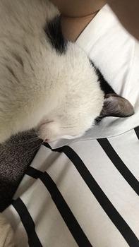 【悲報】猫さんを拾ってしまう(※画像あり)