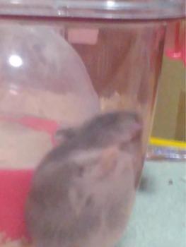 ハムスターが隙間に挟まって寝てるwww(※画像あり)