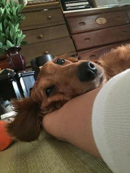 【仲良し犬猫】ワイのイッヌ、腕枕で恋人気分(※画像あり)