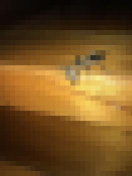 【閲覧注意】カメムシさん、カメムシを喰う(※画像あり)