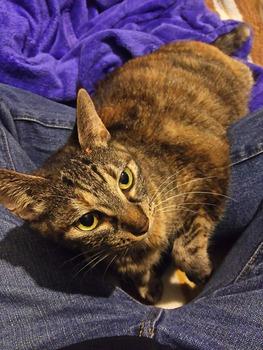 【速報】猫さんのコスパ、暖房要らずで最強だと判明