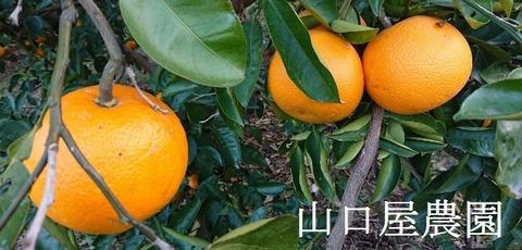 低農薬用 - コピー (640x307)