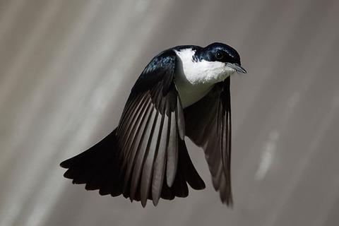 【詩】酩酊した鳥。 ~ 作:藍沢 篠