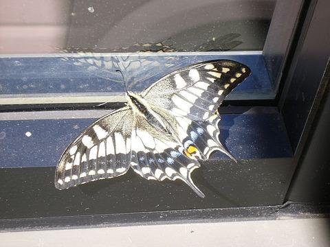 【詩】不死蝶の舞う空。 ~ 作:藍沢 篠
