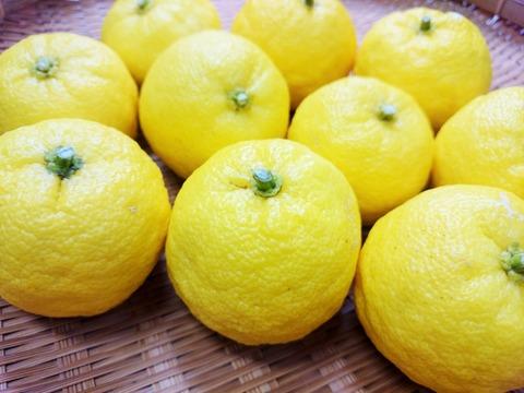 柚子 (2)