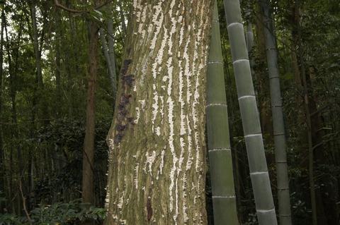 野生のキノコ(滋賀竜王薬師山) (2)