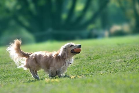 【災難】俺「やめろ!ウチの犬をどうするつもりだ!」おばさん達「飼い主に虐待され捨てられた犬を保護しようとしただけだ!」俺「はぁ?」→結果…