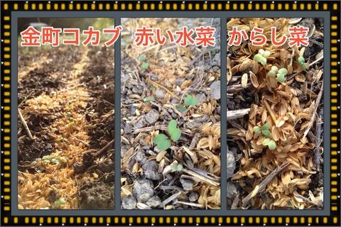 2014-10-02-08-00-52