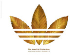 adidasfallcollection