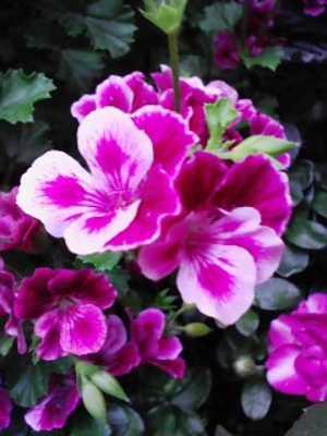 ドレッシーな花