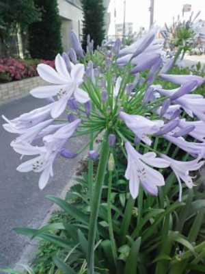 さわやかな花2007.7.18