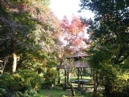 2010.11.19.紅葉