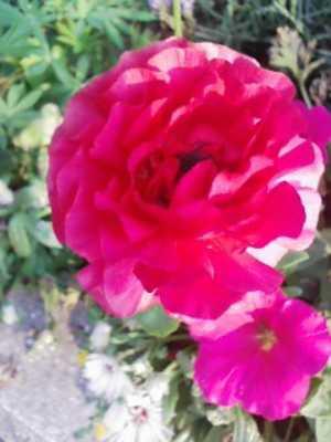 情熱的な赤色の花