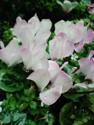 不思議な形の花びら