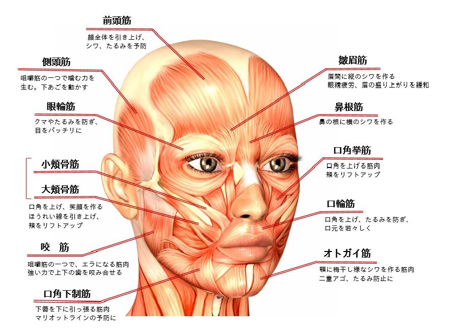 【整筋ケア】老化防止、アンチエイジングに効果絶大の顔体がこれ!