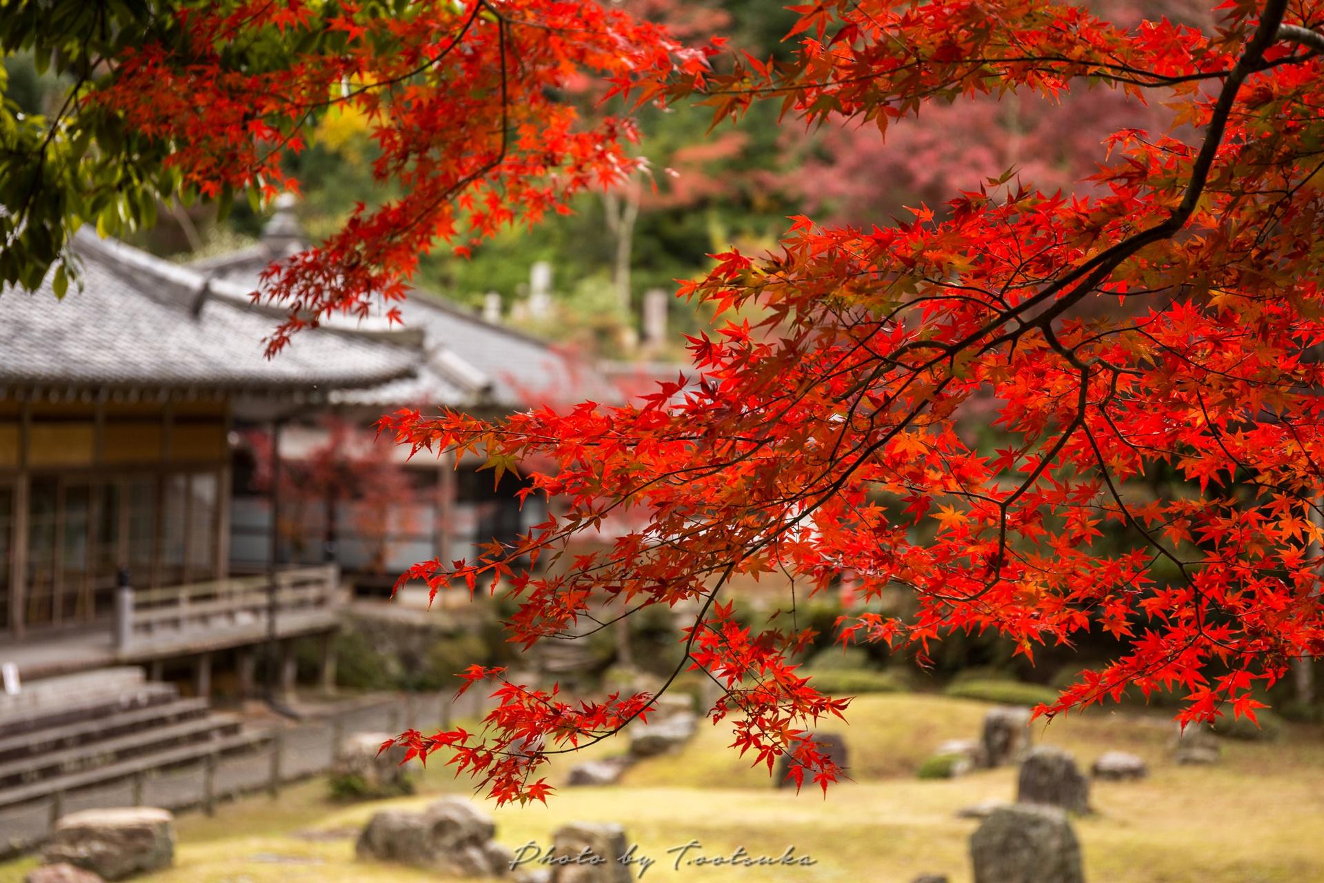 常栄寺雪舟庭の紅葉 : 天体写真撮影日記
