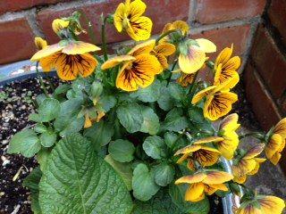 photo flower2