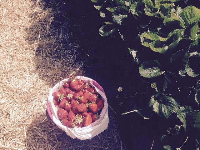 PYO strawberry2