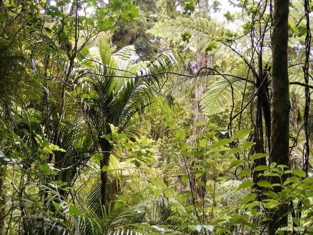 waipoua-forest-1