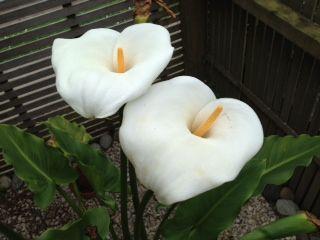 photo flower1