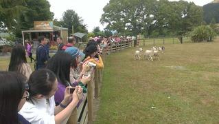 アグロドーム牧羊犬見学