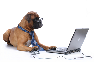 dog laptop