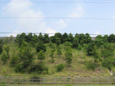 北側法面の緑