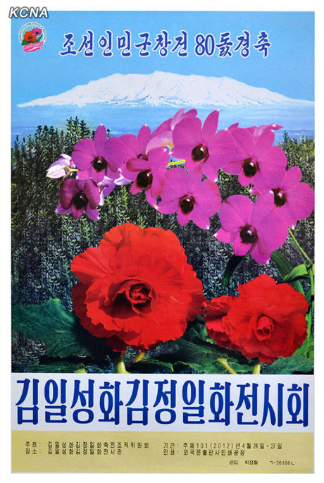 金日成花の画像 p1_20