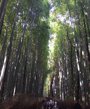 2017京都竹林4