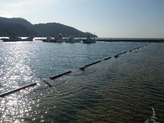 20120118_017牡鹿半島桃浦