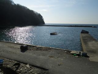 20120118_014牡鹿半島蛤浜