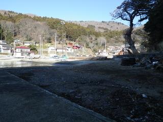 20120118_008牡鹿半島小竹