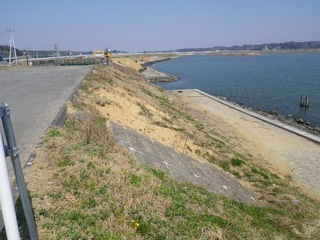 20140424_001鳴瀬川河口